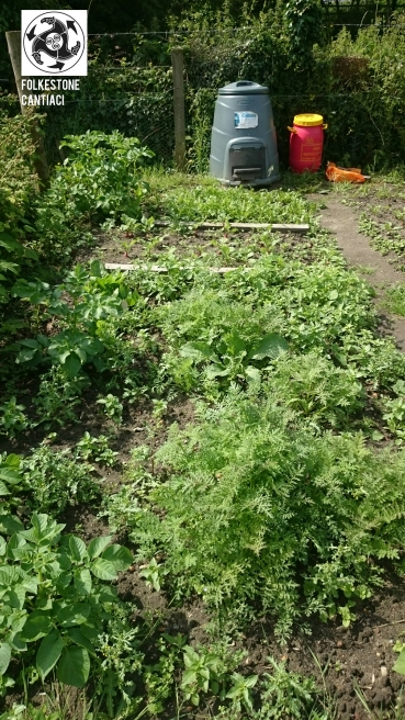 Fokestone, Cantiaci, Folkestone Cantiaci, Community, Transition Town, Allotment, Foraging, Organic, Vegetables