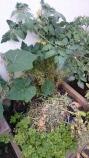 Folkestone, Cantiaci, Folkestone Cantiaci, Community, Food, Kipp's Ale House, Googies, Growing, Organic
