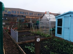 park-farm-allotments-003