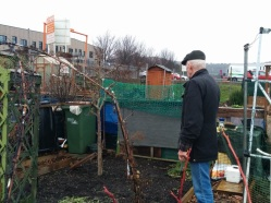 park-farm-allotments-005