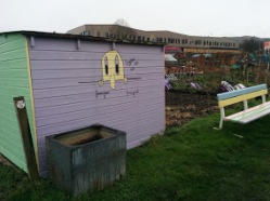 A colourful shed at the allotment